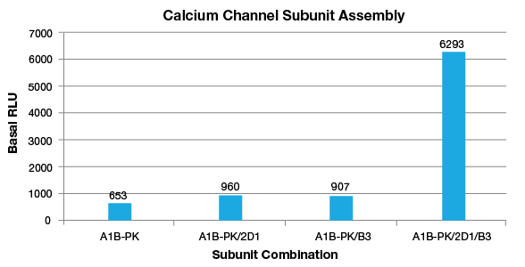 calcium-channel-subunit-assembly-11107.png